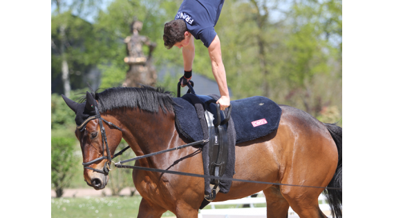 CWD, the official supplier for the French vaulting team.